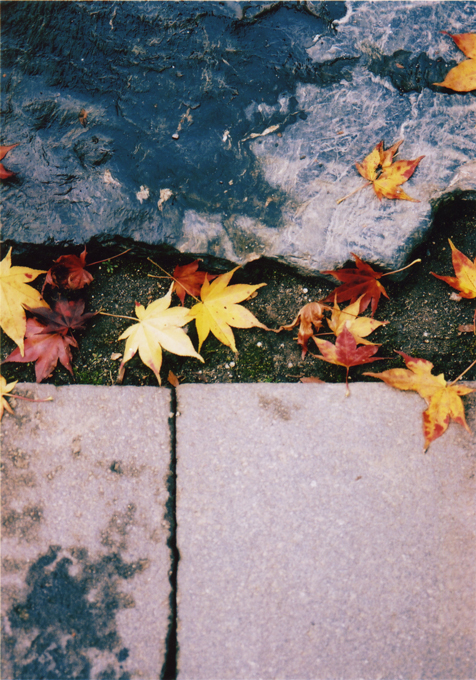 pic_leaves